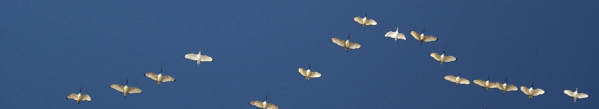 birdwave